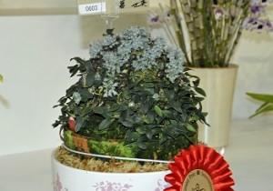Den.leucocyanum 1